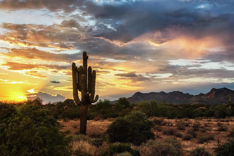 Serenity On A Sonoran Evening  by Saija Lehtonen
