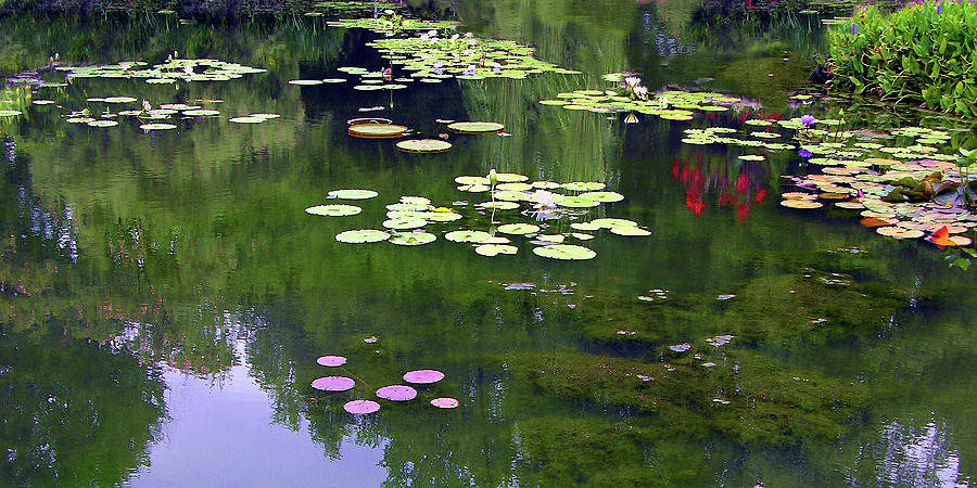 Garden Pond Photograph - Serenity on the Pond by John Lautermilch