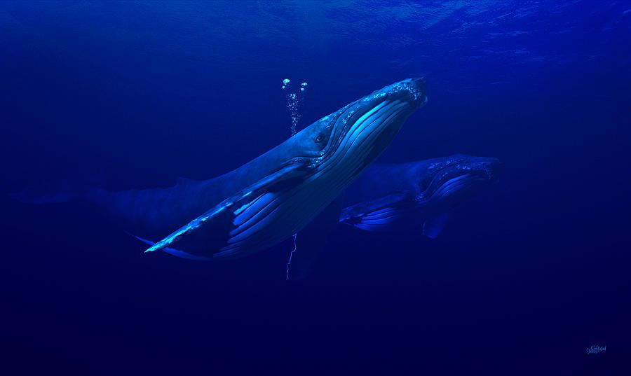 Humpback Digital Art - Humpback Whale Serenity by TJ Solstad