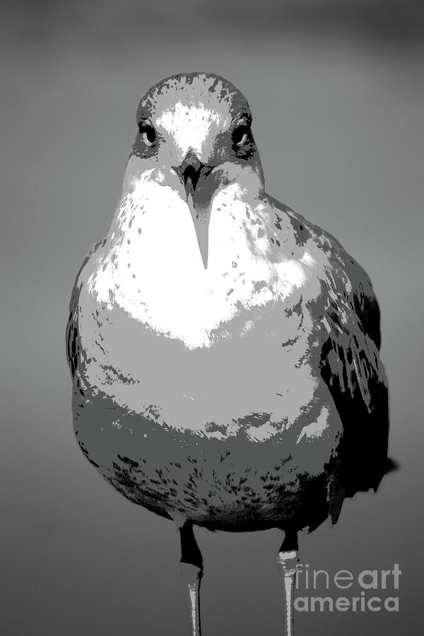 Seagull Photograph - Serious Seagull In Grays by Carol Groenen