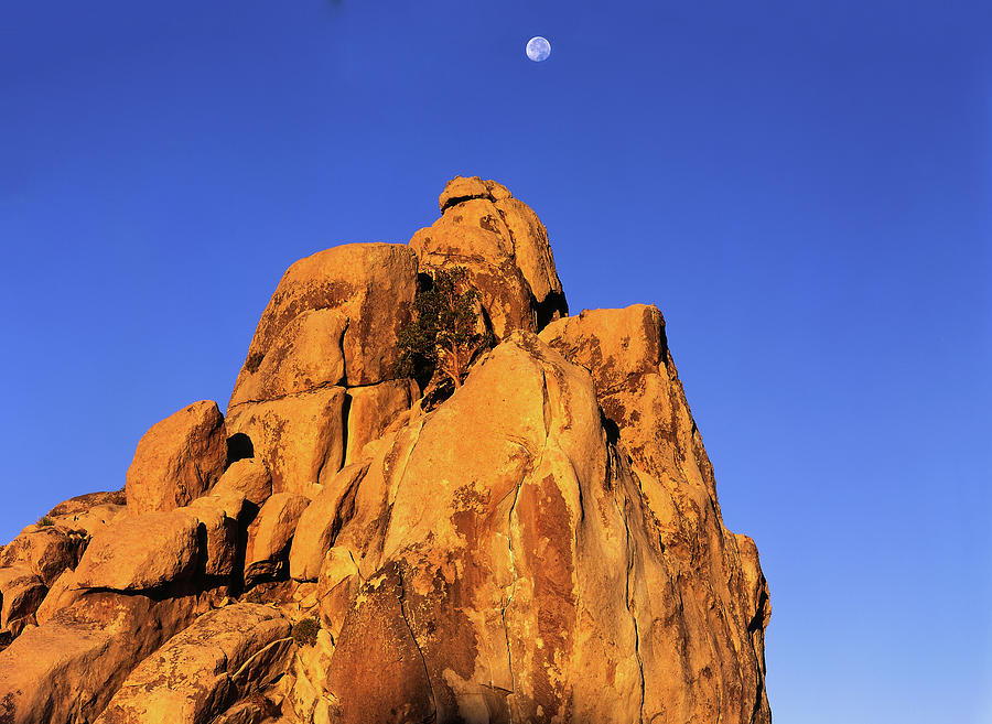 Setting Moon Over Rock Top Tree by Paul Breitkreuz