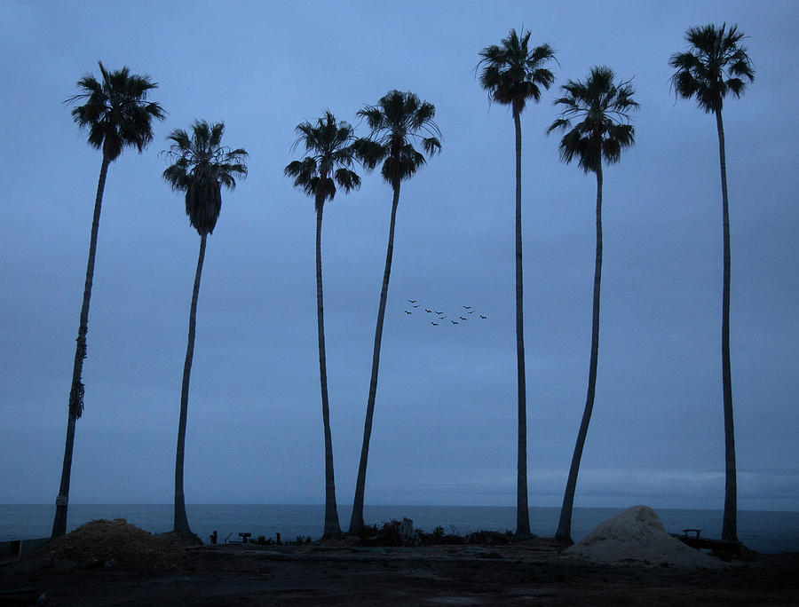 Seven Palms at Dawn by John Rodrigues