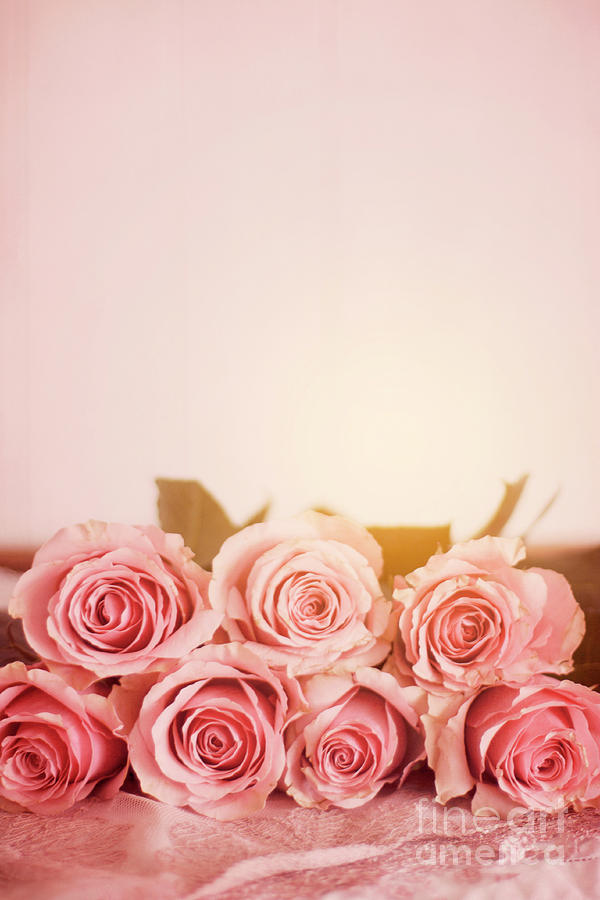 Seven Pink Roses With A Plain Pink Background Photograph By