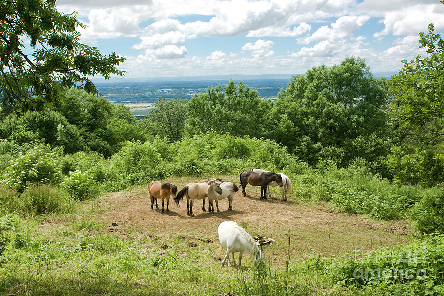 Several horses in the french rolling landscape countryside by Gregory DUBUS