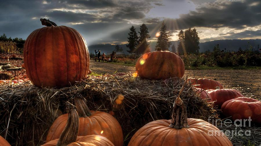 High Resolution Photograph - Several Pumpkins And Hay On Farm Ultra Hd by Hi Res