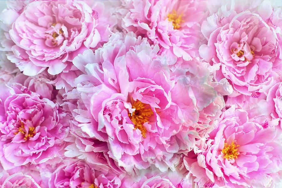 Shabby Chic Pink Peonies by Joy of Life Arts
