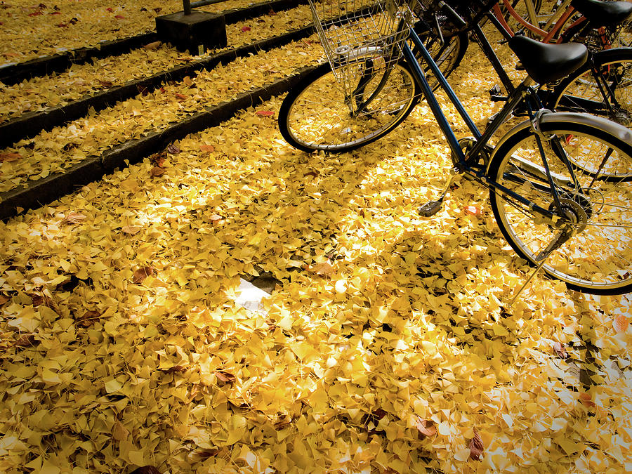 Shade Of Bike On The Fallen Leaves Of Photograph by Marser