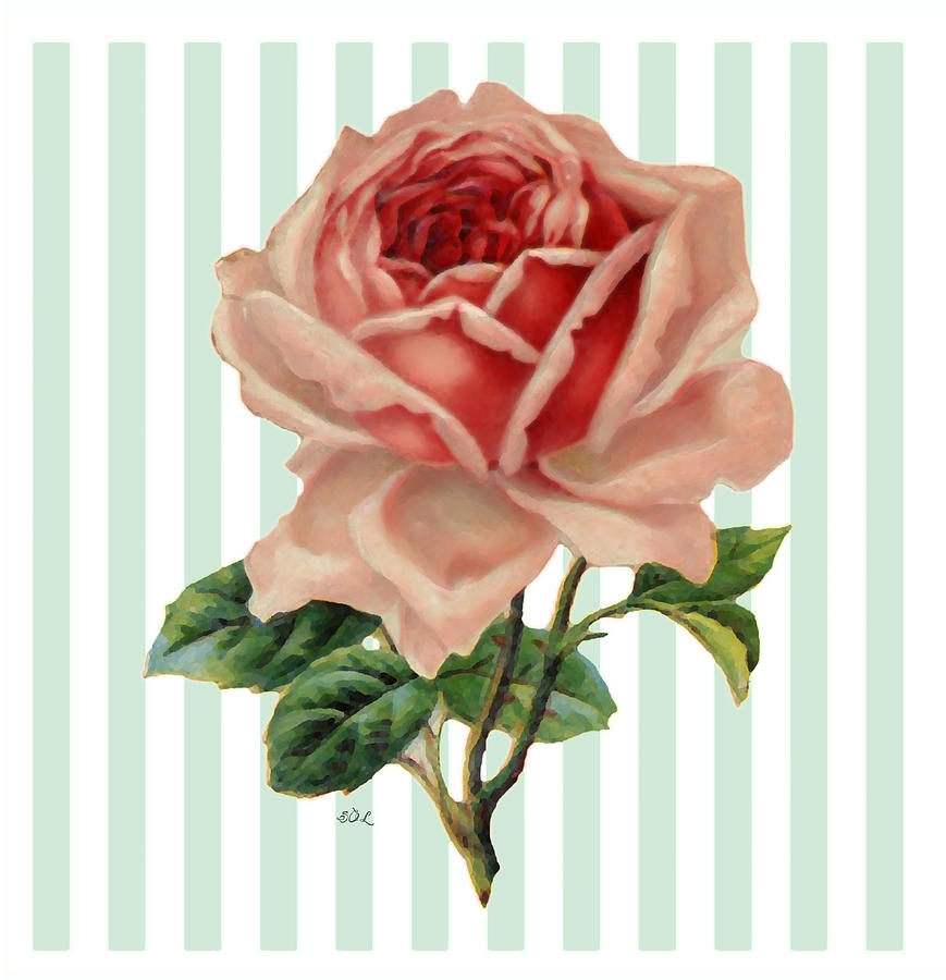 Shades of Coral Painted Rose by Sandi OReilly