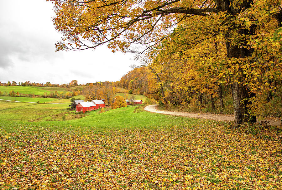 Shades of Gold at the Jenne Farm by Gordon Ripley