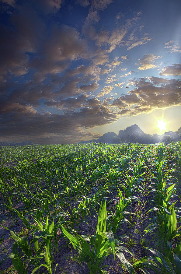 Shades of Life by Phil Koch