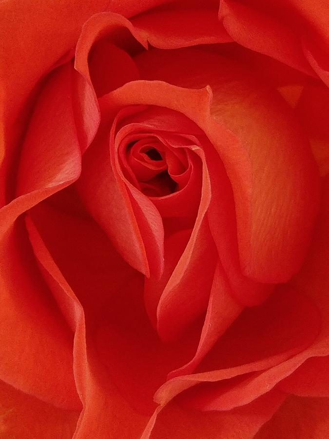 Flowers Photograph - Shades Of Okeeffe by Suzy Piatt