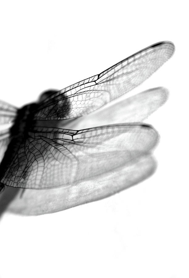 Shadows Of A Dragonfly Photograph by Neville Sukhia Photography