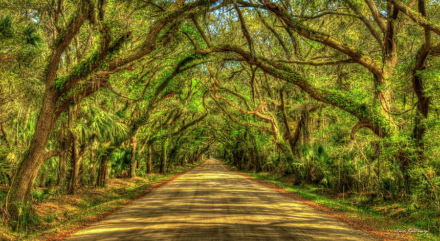 Charleston S C Shadows On Edisto Island Botany Bay Road South Carolina Landscape Art by Reid Callaway