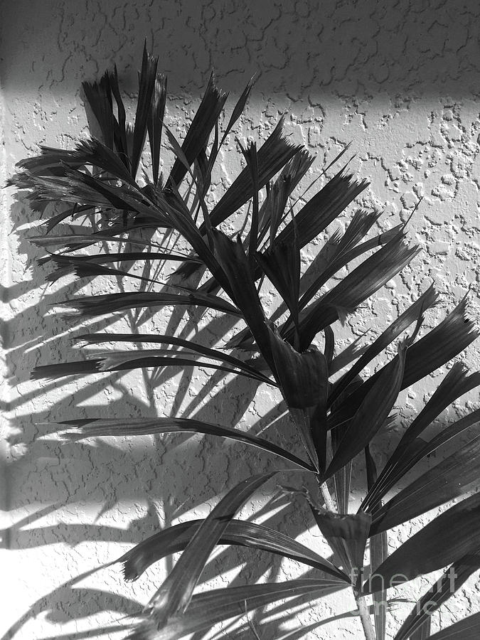 Shadows of Palm by Christine Dekkers
