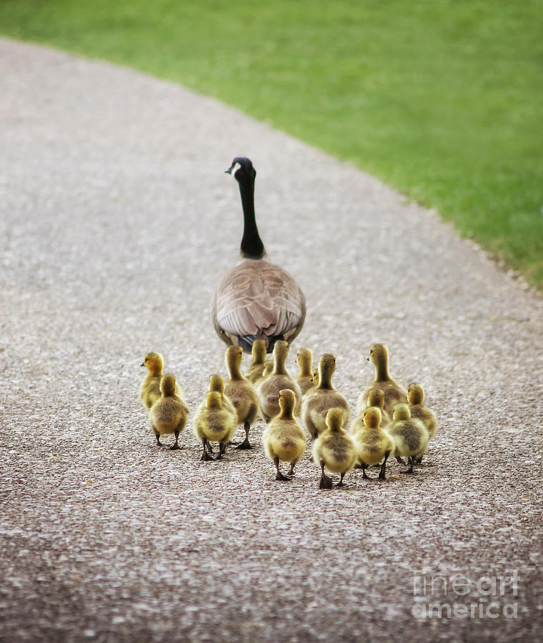 Feather Photograph - Shallow Dof On Babies A Cute Family by Annette Shaff
