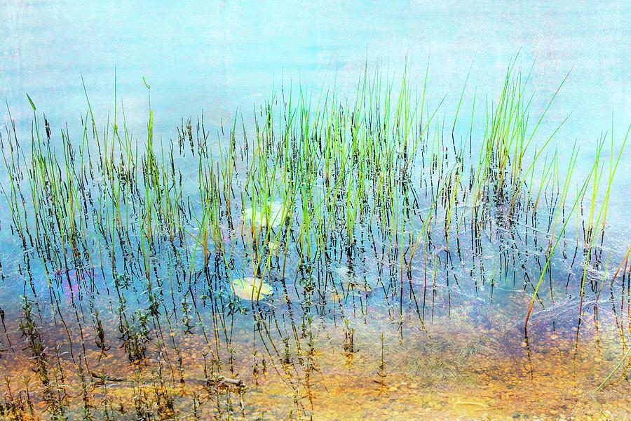 Shallow Reeds by John Rivera