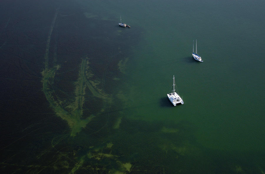 Shallow Seagrass Beds Biscayne Bay Photograph by Scott B Smith Photography