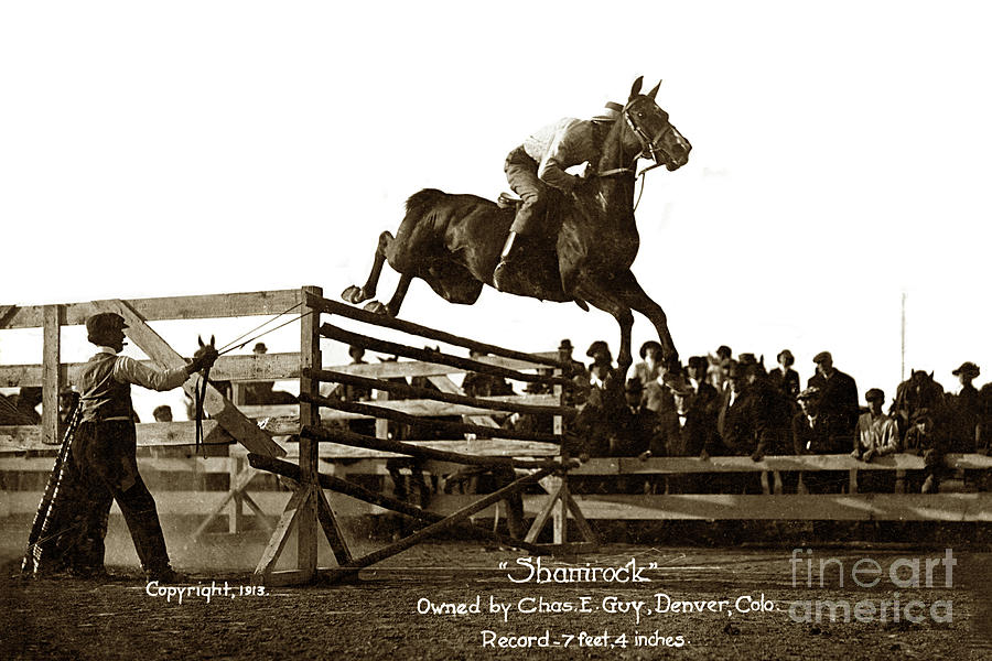 Shamrock  high jump 7feet 4 inchsowned by Chas. E. Guy. Denver,  by California Views Archives Mr Pat Hathaway Archives
