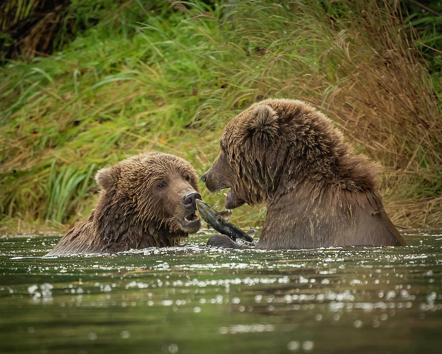 Sharing Dinner by Laura Hedien