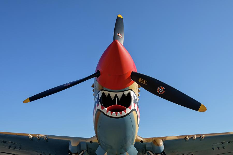 Shark Teeth and Steel by Chris Buff