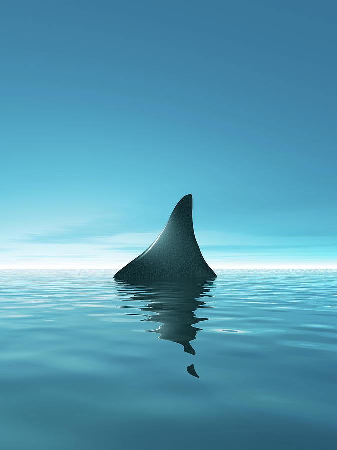 Shark Waiting In Th Calm Blue Sea Digital Art by Artpartner-images