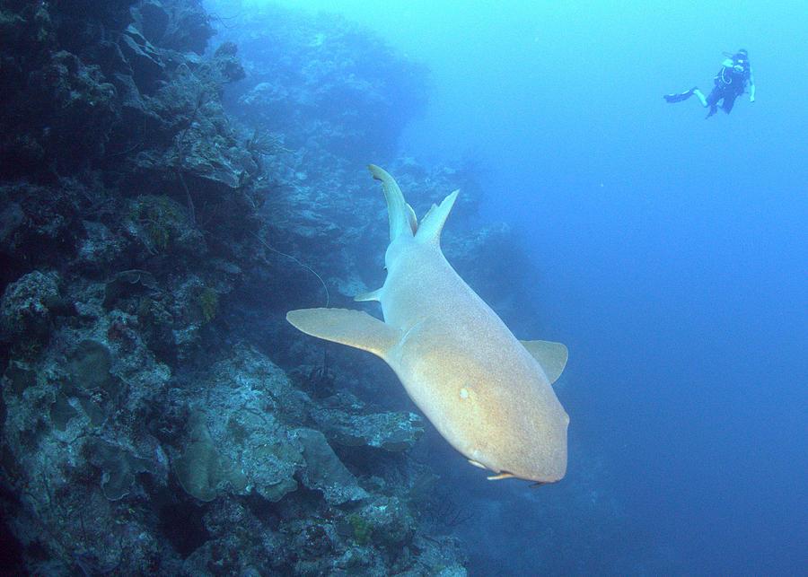 Shark Wall Photograph by Todd Hummel
