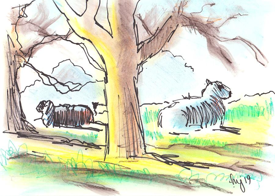 Sheep lying down under trees morning sun by Mike Jory
