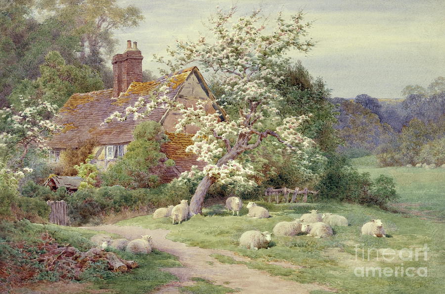 Adams Painting - Sheep Outside A Cottage In Springtime by Charles James Adams