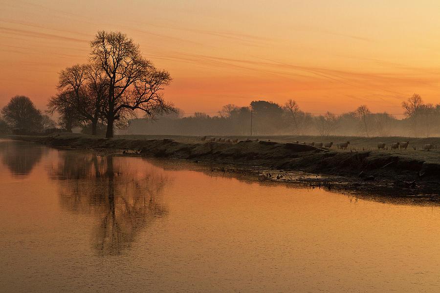 Sheep Sunrise Photograph by Paulscreen