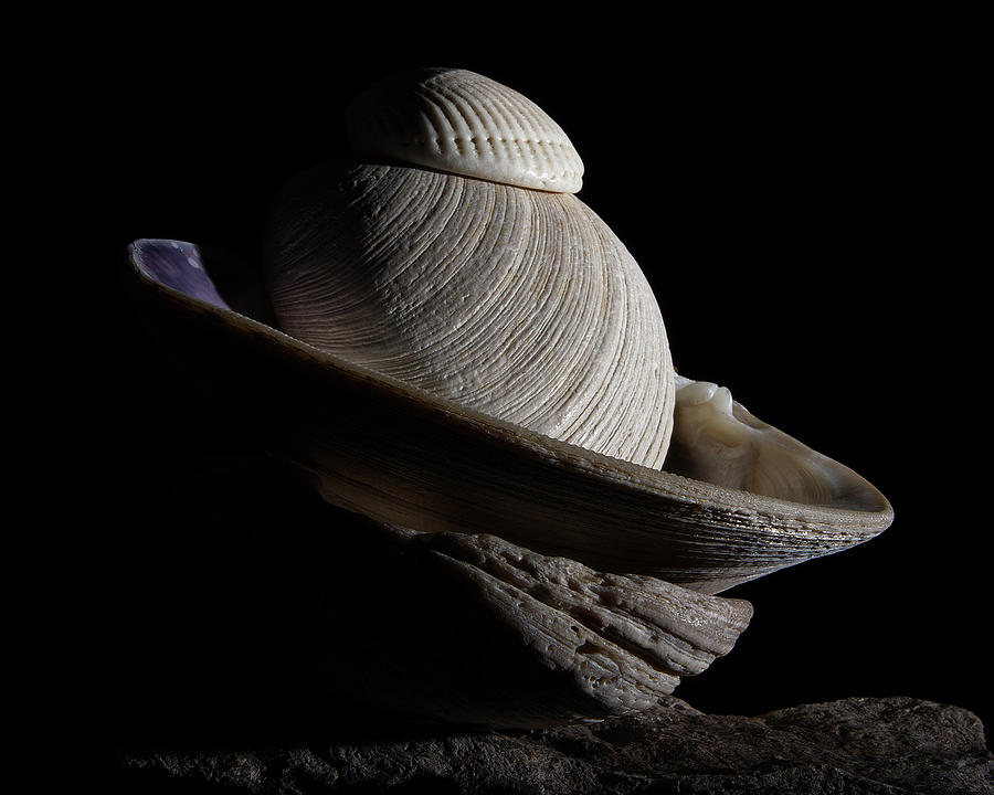Shell Abstract by Richard Rizzo