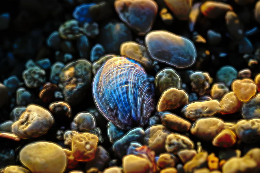 Shell and Rocks Abstract by Karen Silvestri