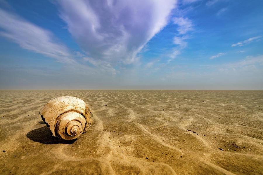 Shell at Hunting Island by Joye Ardyn Durham