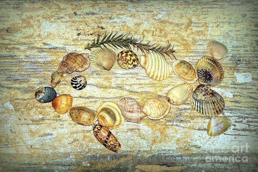 Shell Fish 2 by Kaye Menner by Kaye Menner