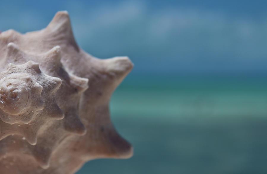 Shell Photograph by Gizet Gonzalez