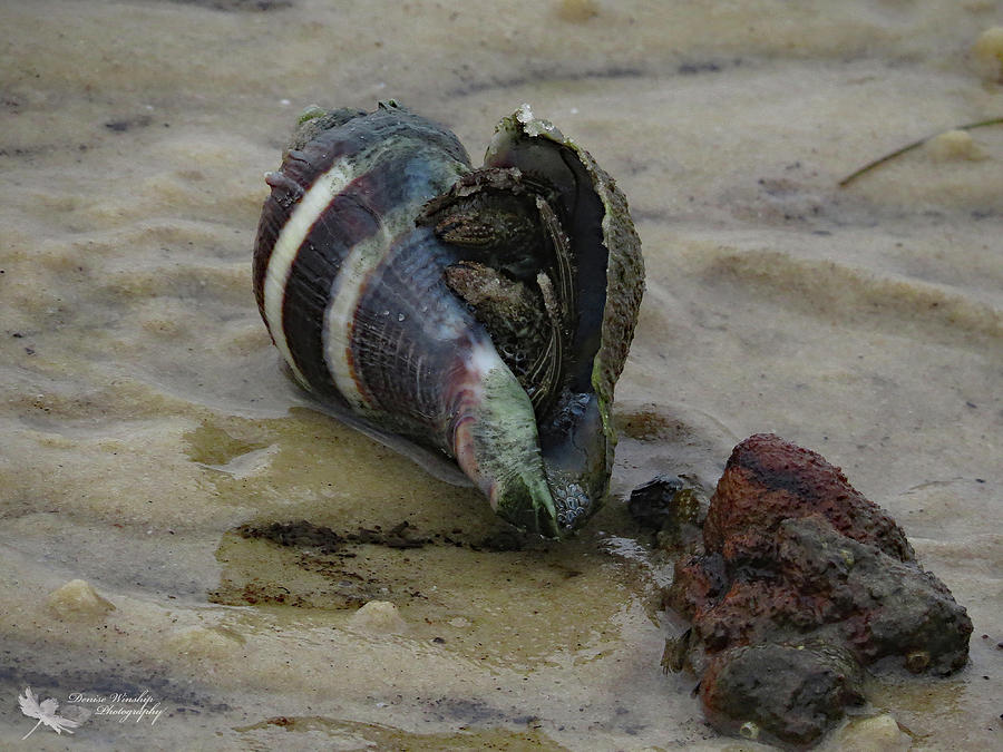 Shell on the Shore by Denise Winship