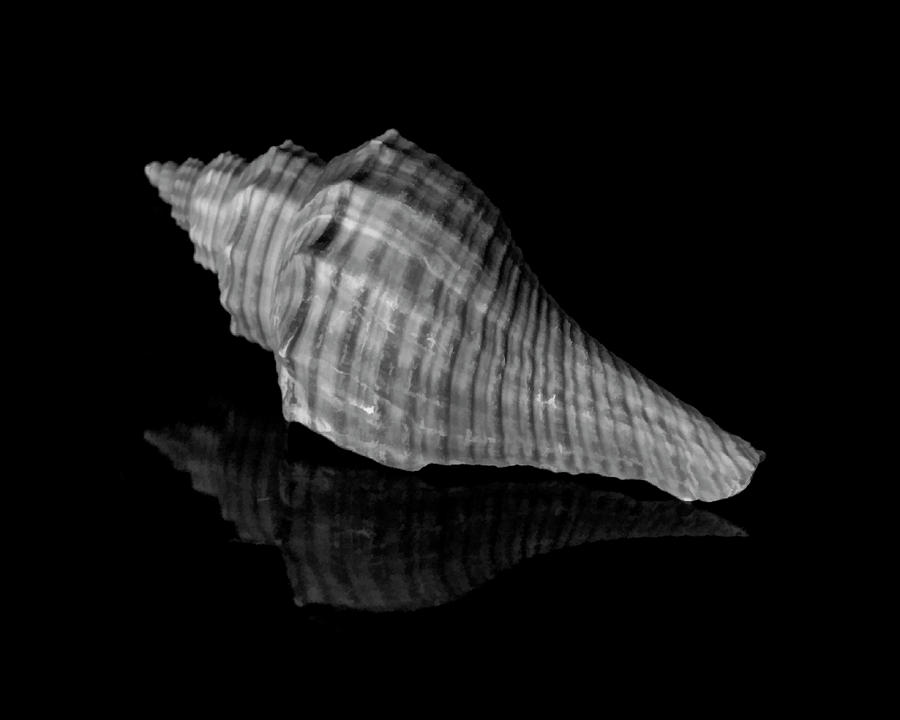 Shell Study in Black and White by Cathy Kovarik