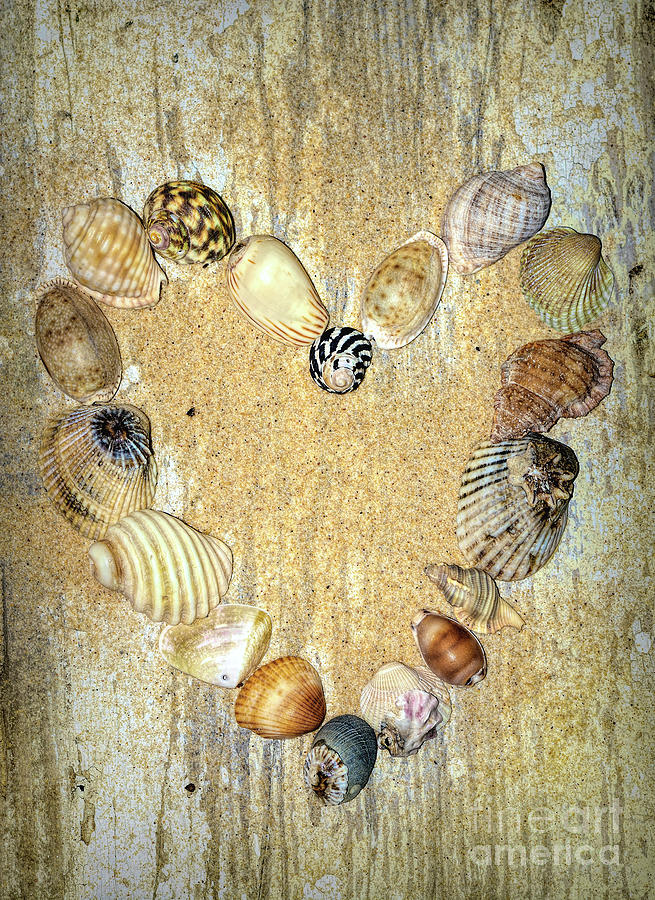 Shells of the Heart 2 by Kaye Menner by Kaye Menner