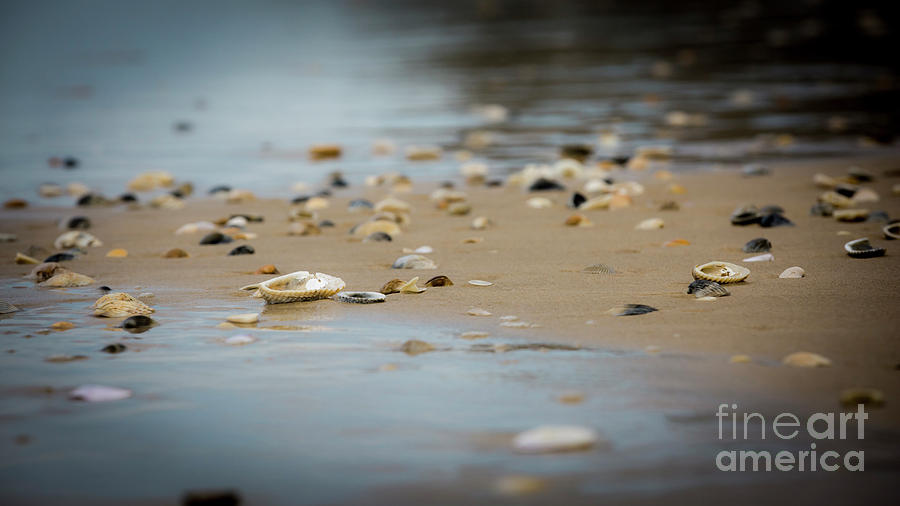 Shells on a beach by Agnes Caruso