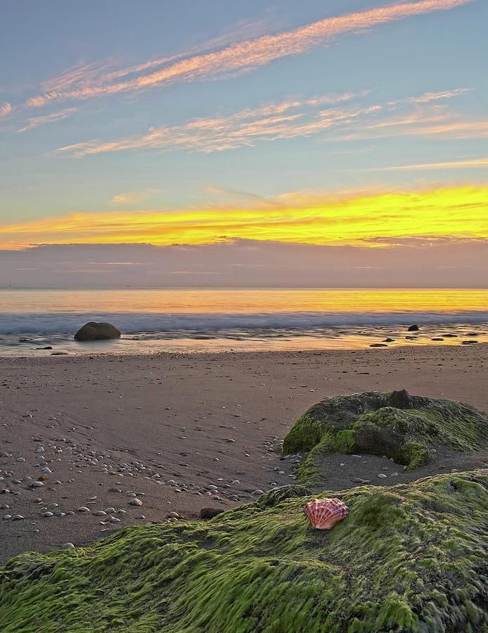 Shells On The Beach 2 by Steve DaPonte