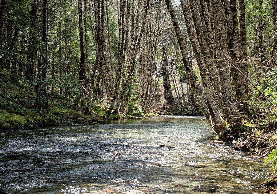 Shelly Creek by Betty Depee