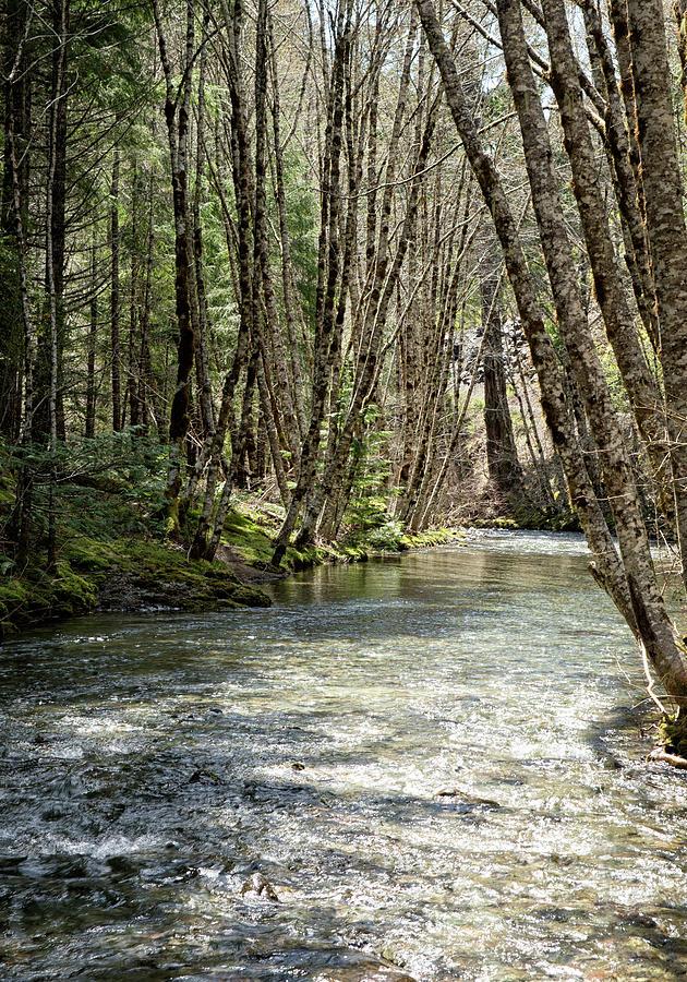 Shelly Creek Portrait by Betty Depee