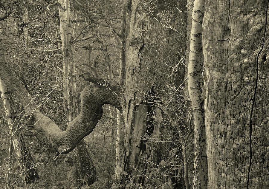 Sherwood oaks by Jerry Daniel
