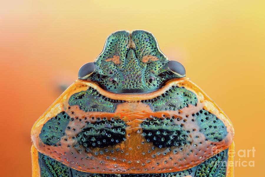 Shieldbug Photograph - Shieldbug by Ozgur Kerem Bulur/science Photo Library