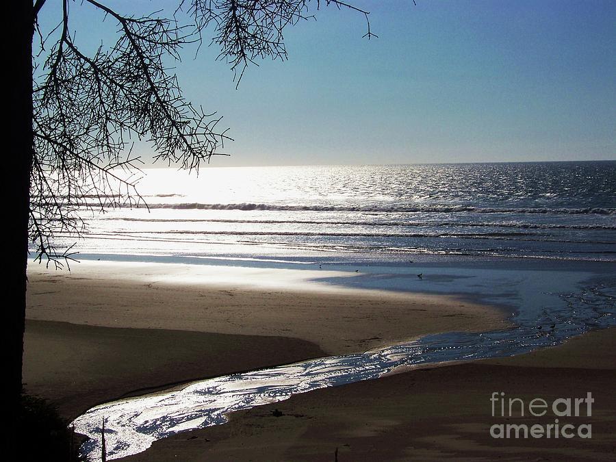 Shimmering Sea by Julie Rauscher