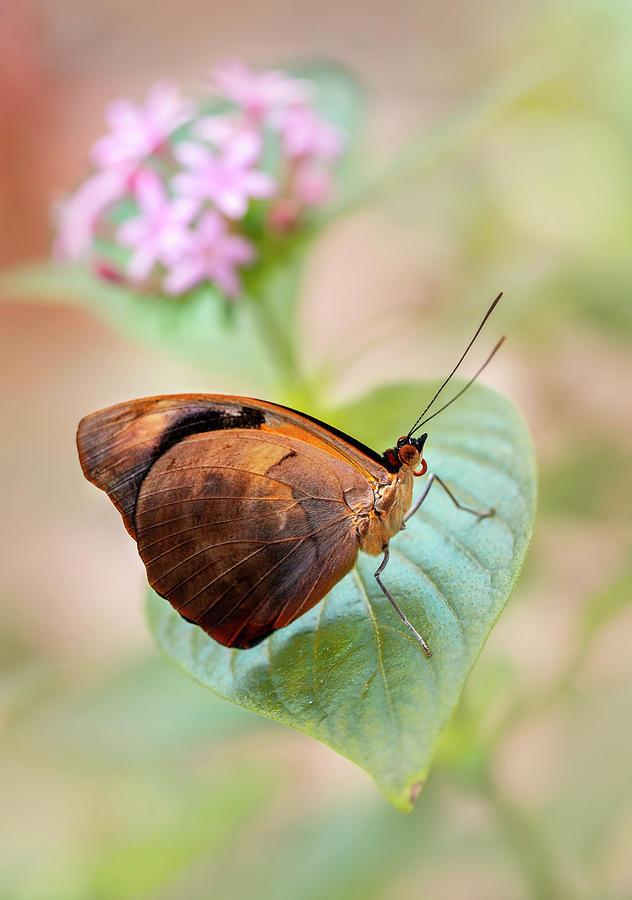 Shiny brown beauty by Jaroslaw Blaminsky