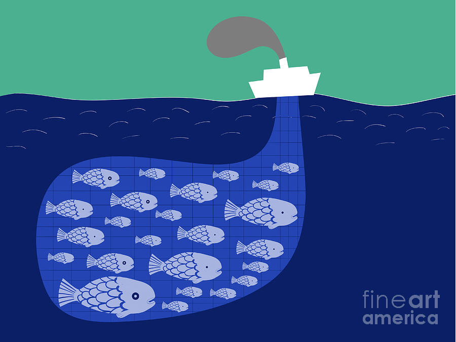Pond Digital Art - Shoal Of Fish In The Boat Fishnet by Complot