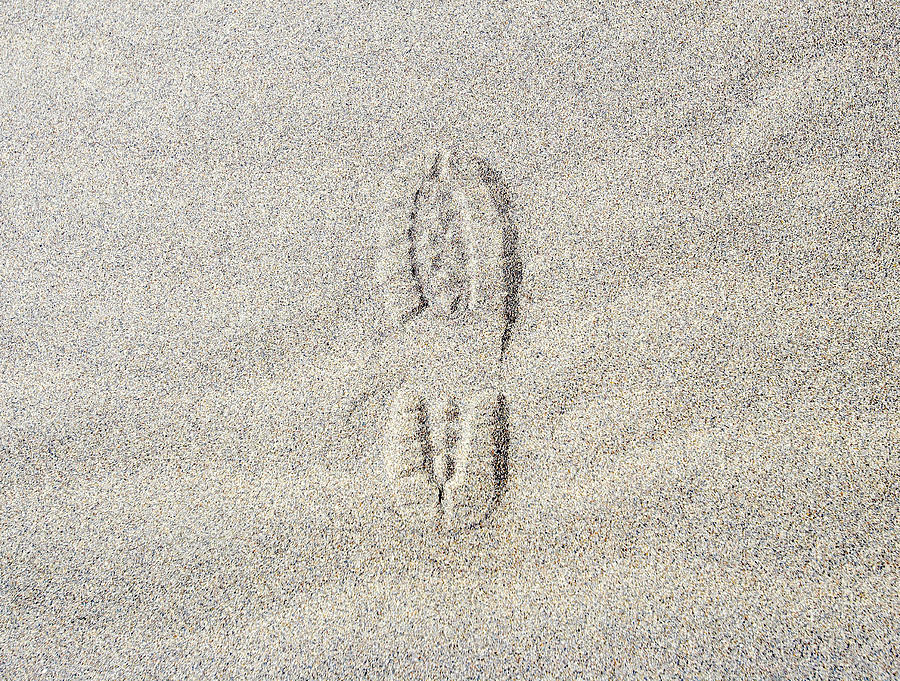 Shoe Print In Sand Photograph by Thomas Northcut