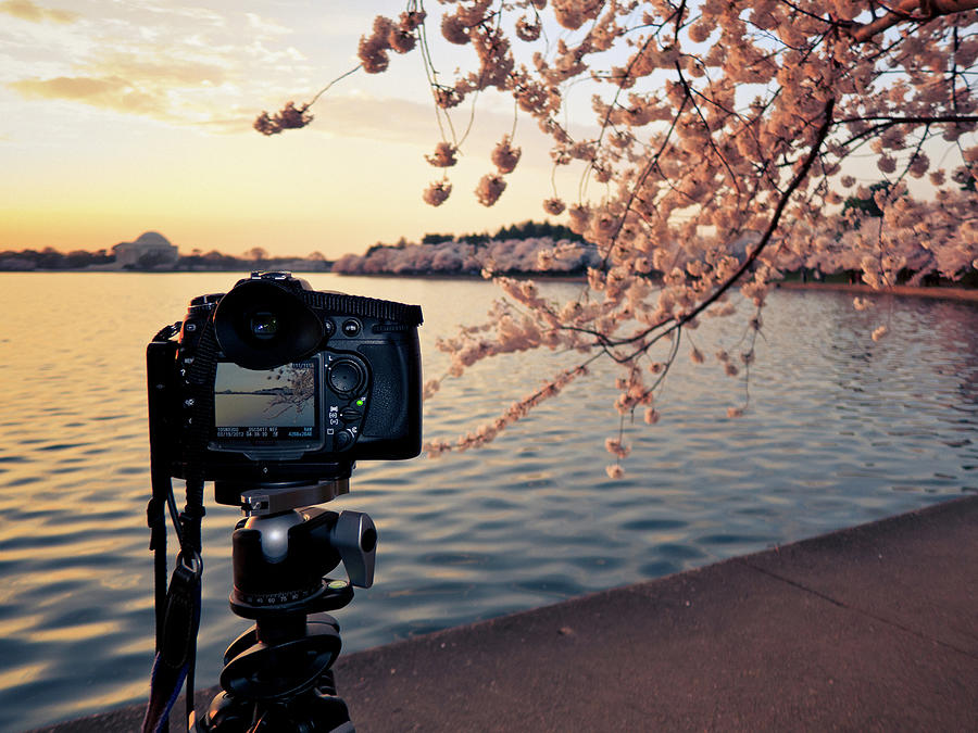 Shooting Cherry Blossoms In Washington Photograph by Camrocker