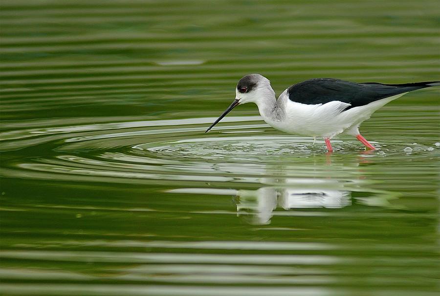 Shore Bird In Lake Photograph by Boti