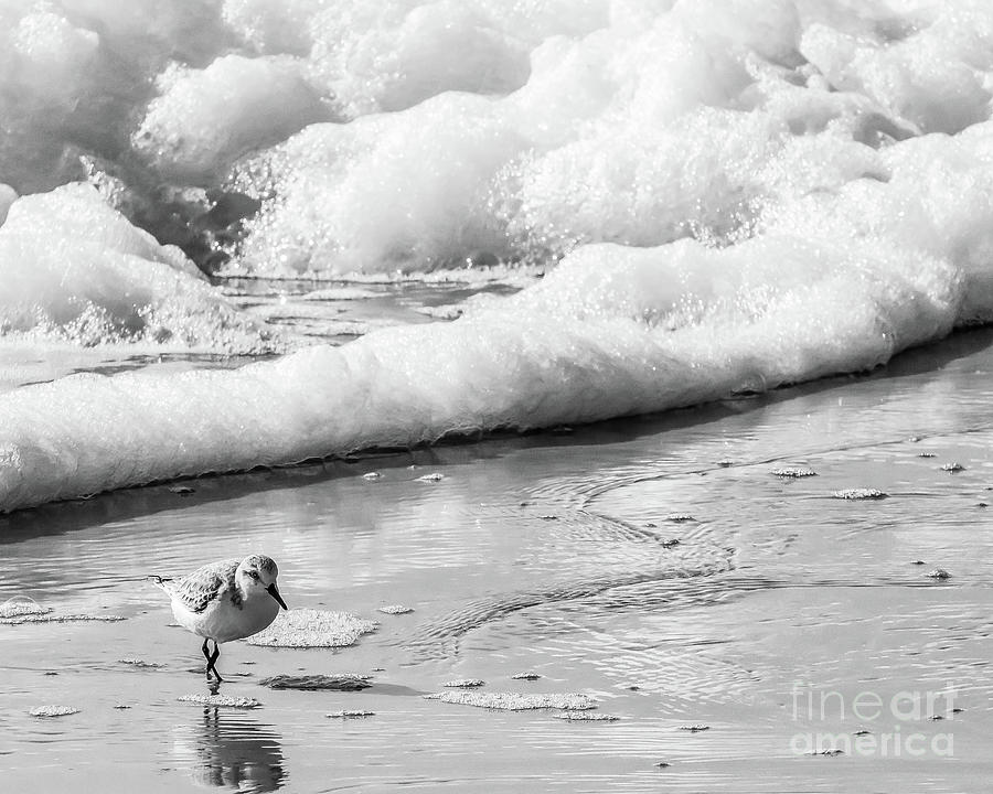 Shore Bird in the Surf by Thomas Marchessault